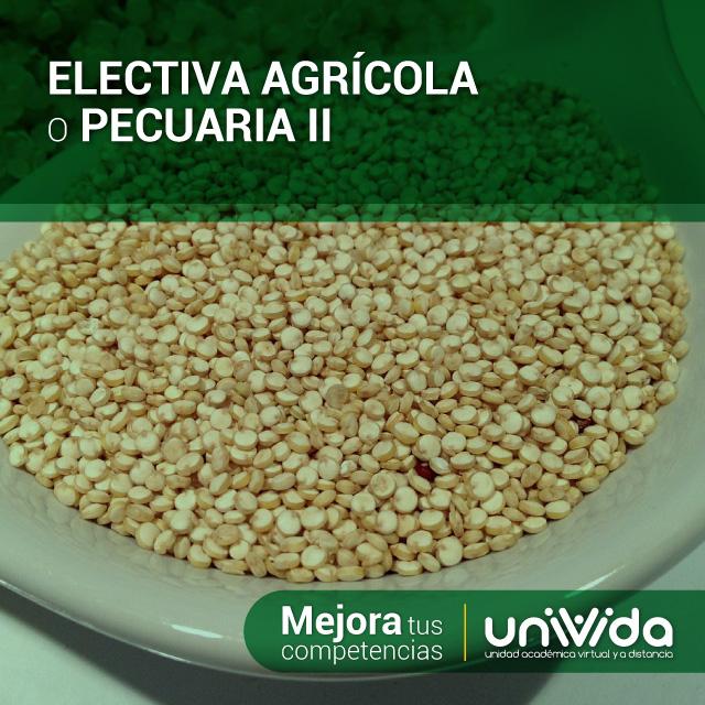 ELECTIVA-AGRÍCOLA-O-PECUARIA-II-(Quinua)