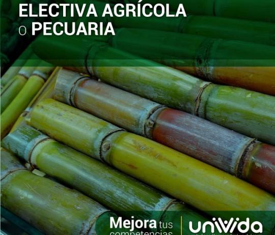 ELECTIVA-AGRÍCOLA-O-PECUARIA-(caña)