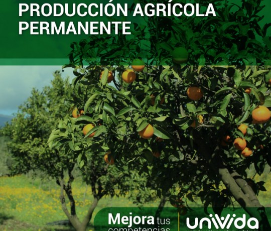Produccion-agricola-permanente