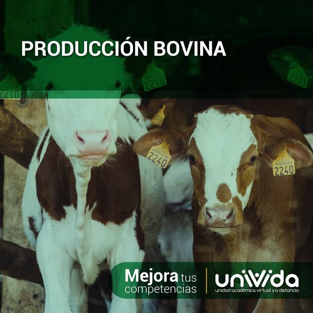 Produccion-bovina